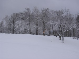 Looking out towards Picnic Loop- there is a couple inches on the ground and lots of snow in the trees.